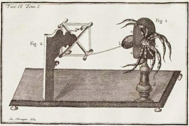 A contraption used to extract the silk from a spider
