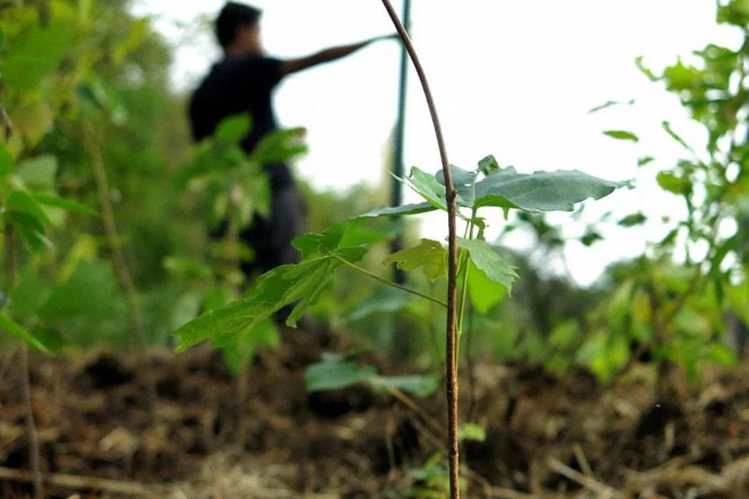 Akira miyawaki and his method. The Miyawaki Method A Better Way To Build Forests Jstor Daily