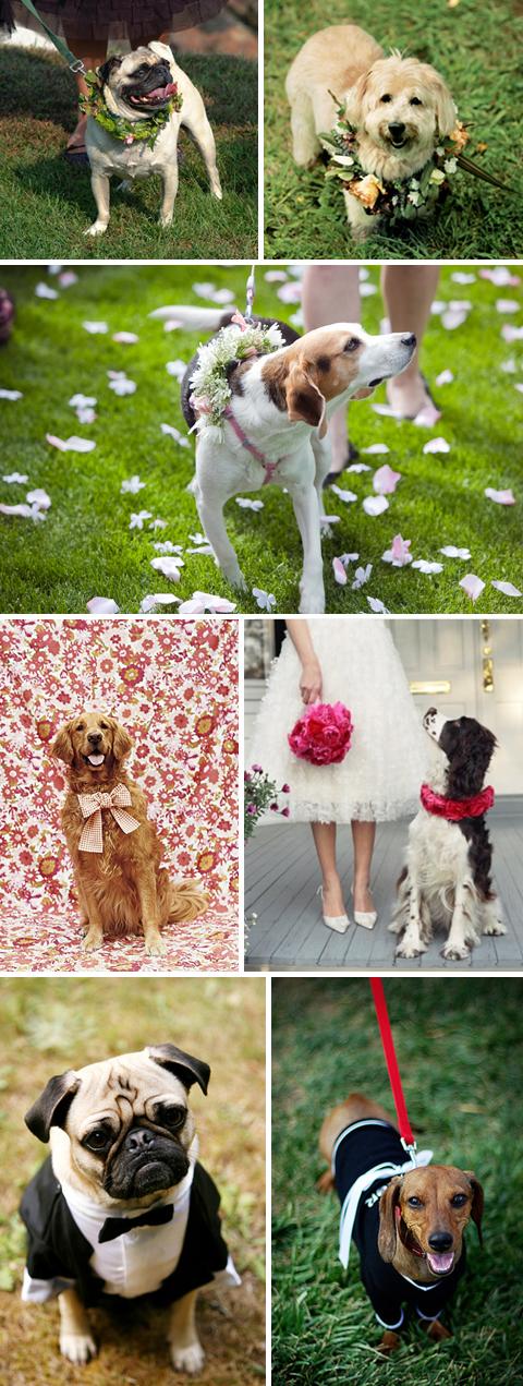 LuckyPups Blog The Wedding Dog
