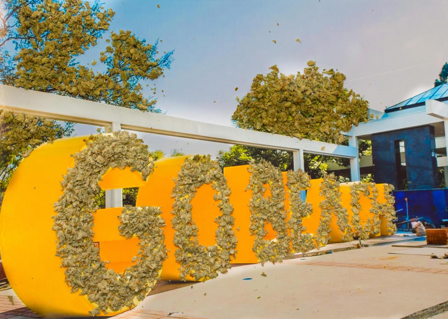 CSULB to remain weed free  Daily 49er