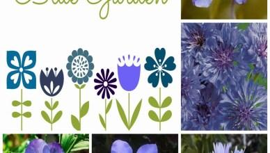 Blue Flowers for a Garden 3