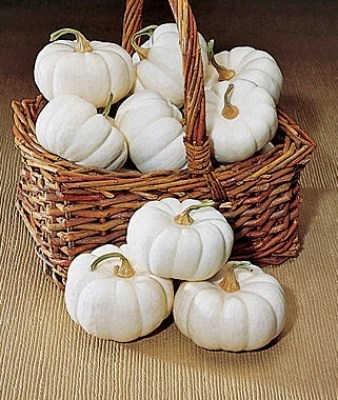 List of different types of pumpkins: Baby Boo Pumpkin