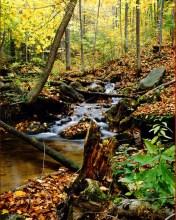 Pretty-River