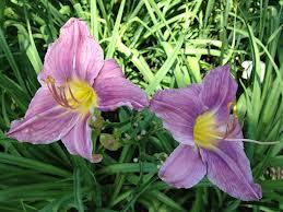graceXflowers