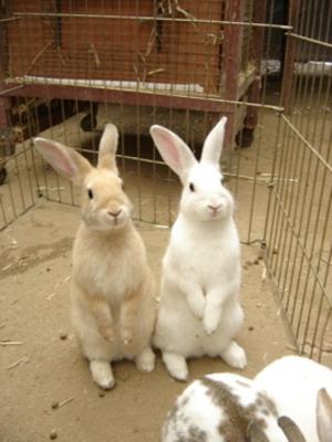 P Name Cute Wallpaper Outside Club Binx Cute Bunnies House Rabbit Pet