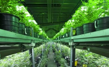 Indoor marijuana grow operation. Credit: Canna Obscura/Shutterstock