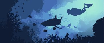 Marine underwater flora and fauna background with swimming diver shark fishes and seaweeds vector illustration (Shutterstock/VectorPot)