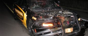 The result of a Minnesota police officer hitting a deer at 100 mph (Isanti County Sheriff's Office)