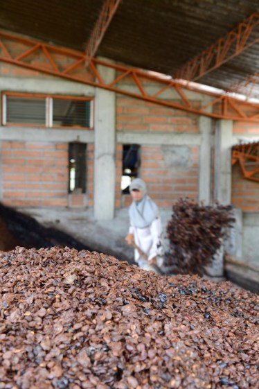 """Dry coffee """"skin"""" getting piled up for compost at the wet mill - in Venceia, Colombia. Photo by Mark Shimahara."""