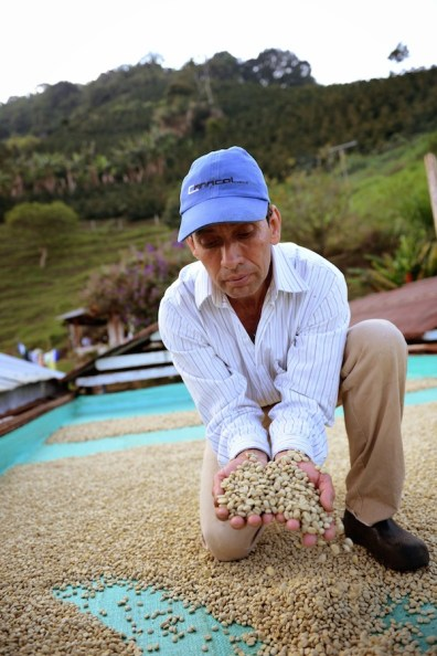 At the farm of Conrado Antonio Marin of Jardin (second place at the Antioquia's Best Cup). Photo by Mark Shimahara.