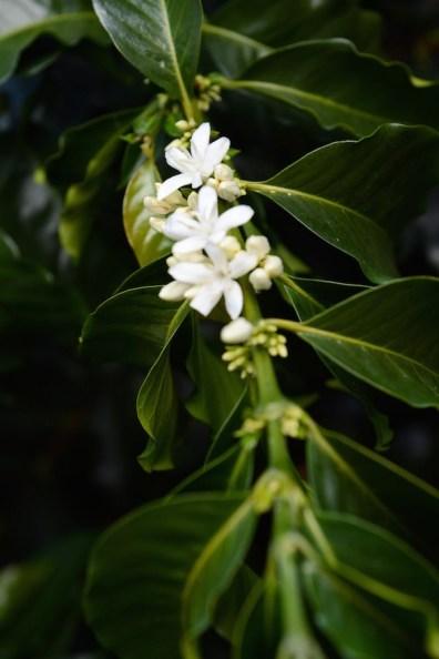Jardin, Antioquia, Colombia. Photo by Mark Shimahara.