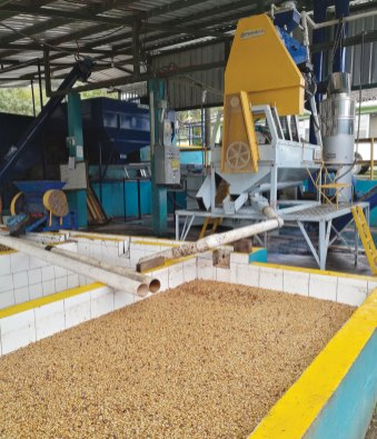 Wet milling at the Cohorsil co-op in Honduras. Photo by David Alejandro Hernandez.