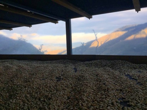 coffee drying sunset