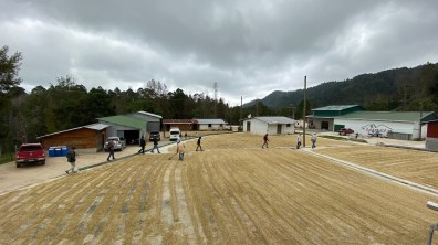 At the Xinacla Mill during ECWx Honduras. Photo courtesy of Intelligentsia Coffee.