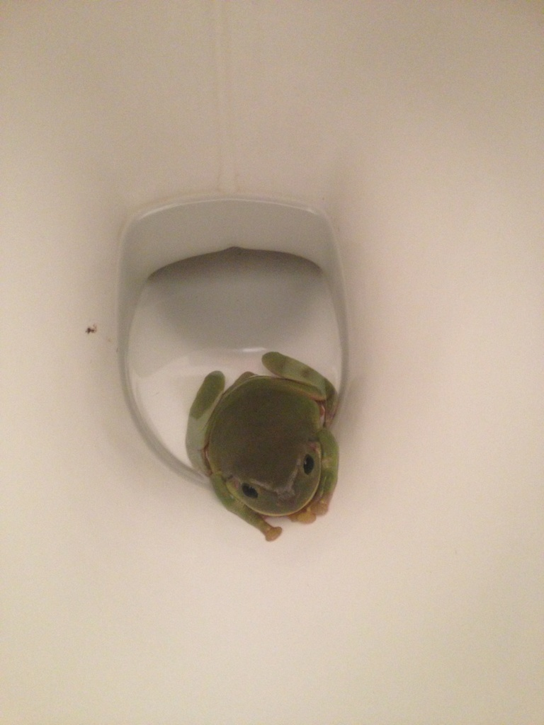 Snakes in a Toilet 5 Animals Capable of Crawling Up Your