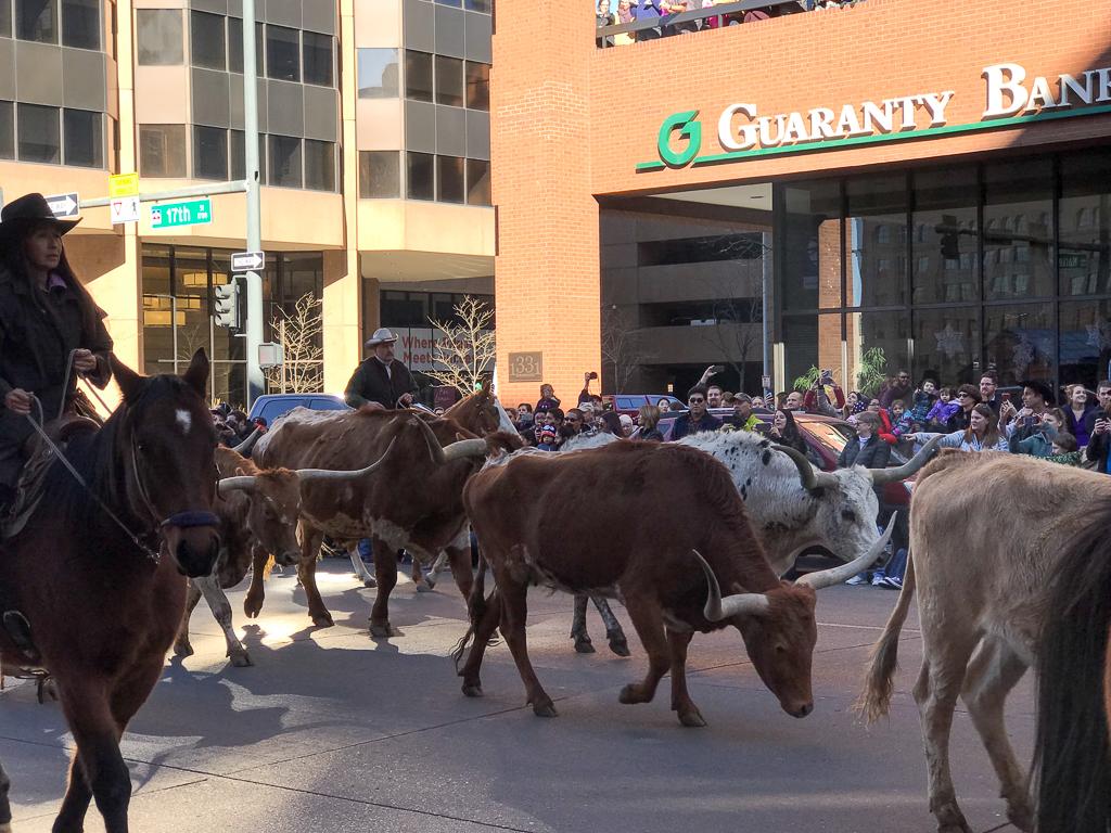 Stock Show Parade!