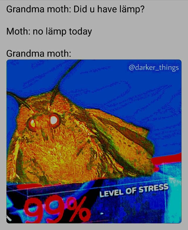 Moth Meme Original : original, Memes, Taking, Internet: