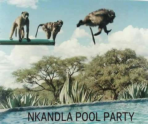 Nkandla pool party