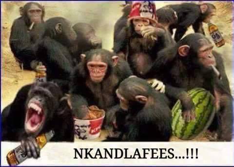 Nkandla fees