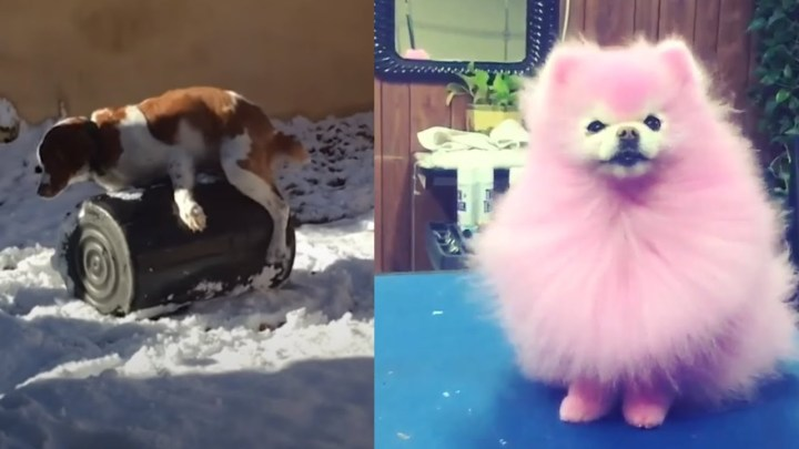🤣 Funniest 🐶 Dogs Fail Videos – Awesome Pet Fails 😇