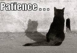 patience-is-a-virtue-crop