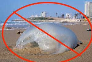cropped-tel_aviv_jellyfish