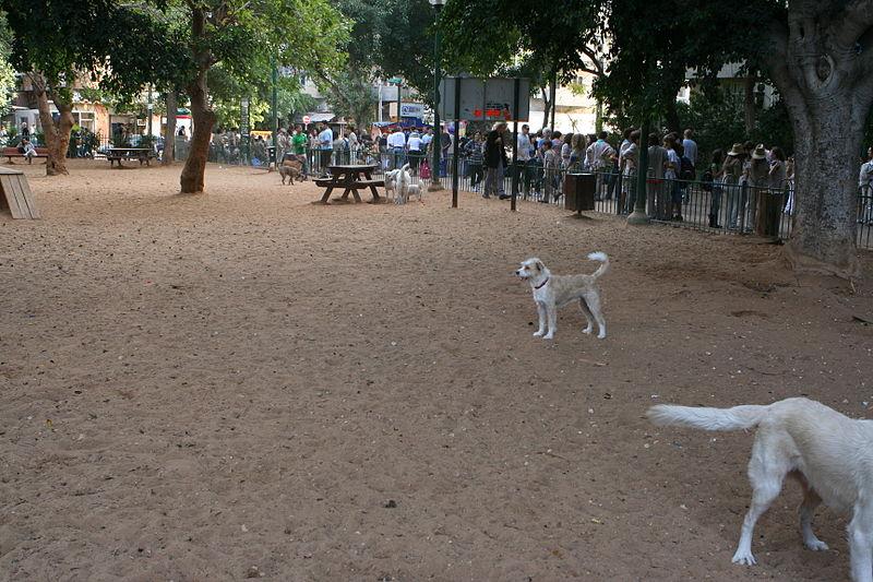 Vegan dogs' meetups club opening its doors at Gan Meir Daily Freier