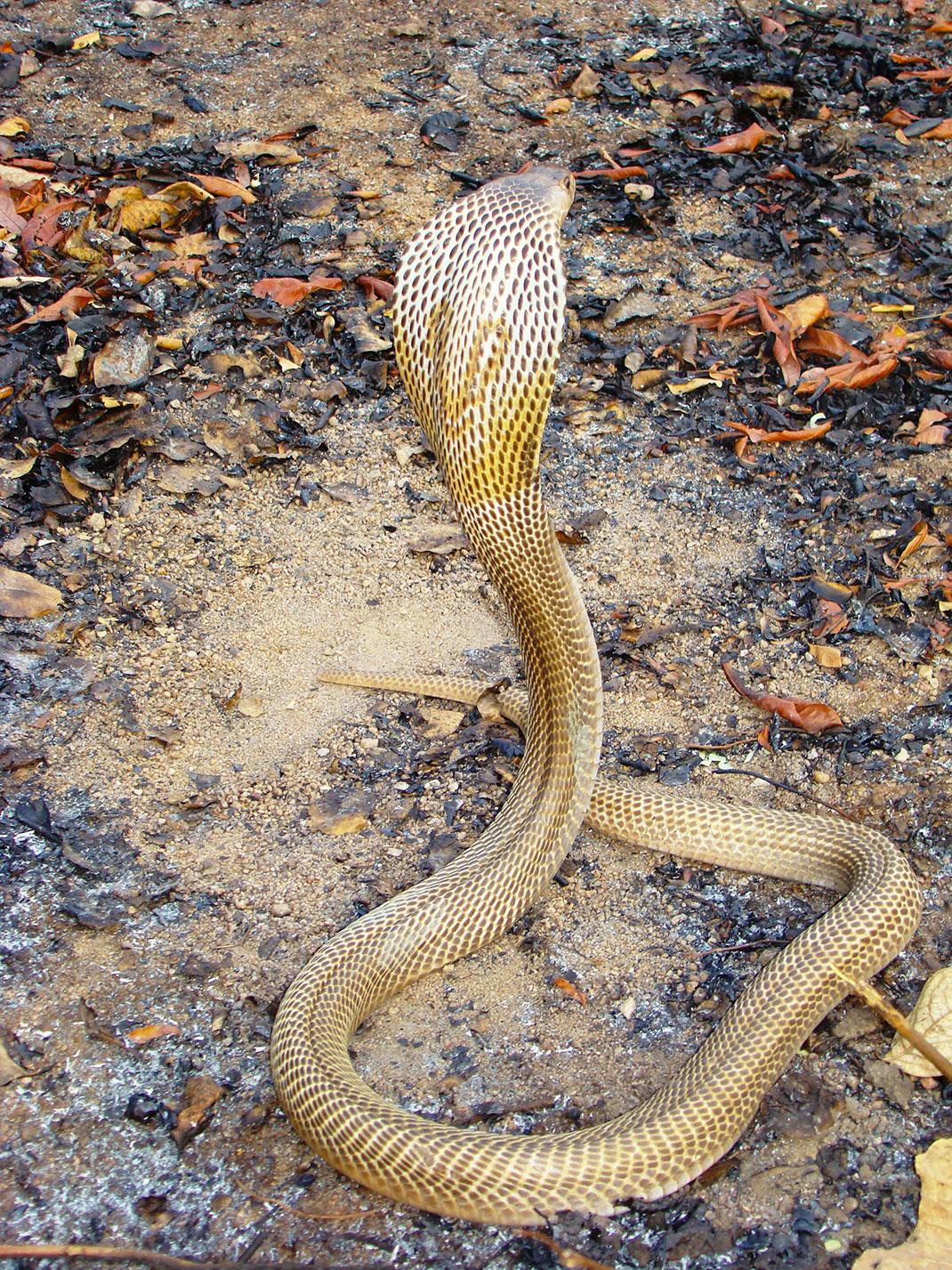 Top 15 des Serpents les plus Dangereux du Monde | Esprit