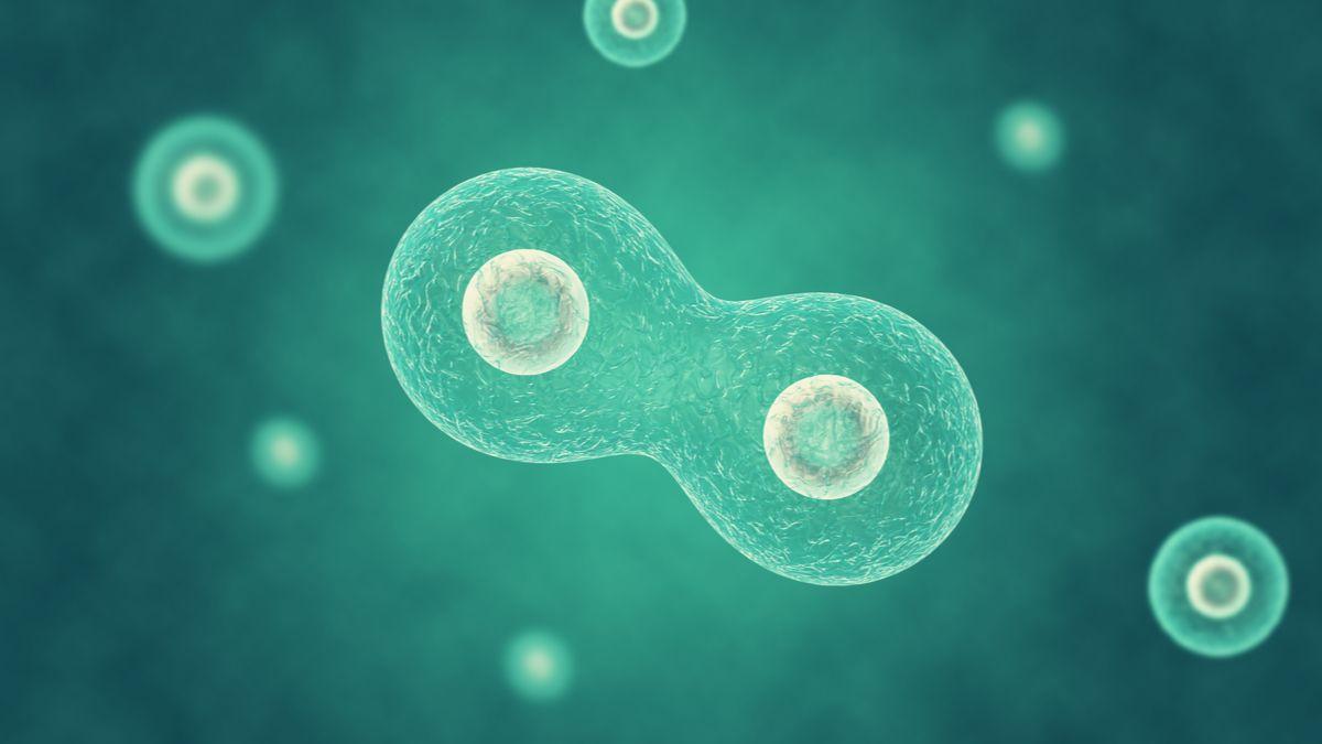 Cet organisme artificiel peut se développer et se diviser comme une bactérie naturelle