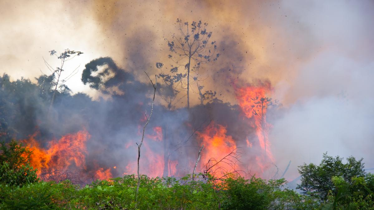 Depuis 10 ans, la forêt amazonienne produit plus de CO2 qu'elle n'en absorbe