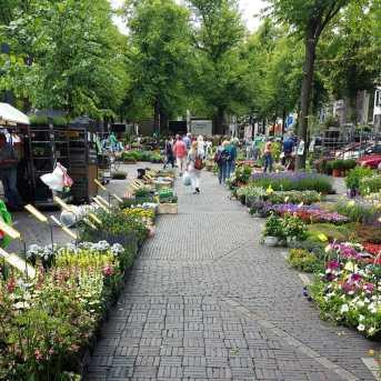 Flower Market Utrecht