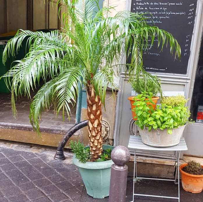 11 arrondissement Green Paris