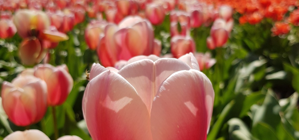 Plant Your Spring Flower Bulbs Now Dailygreenspiration