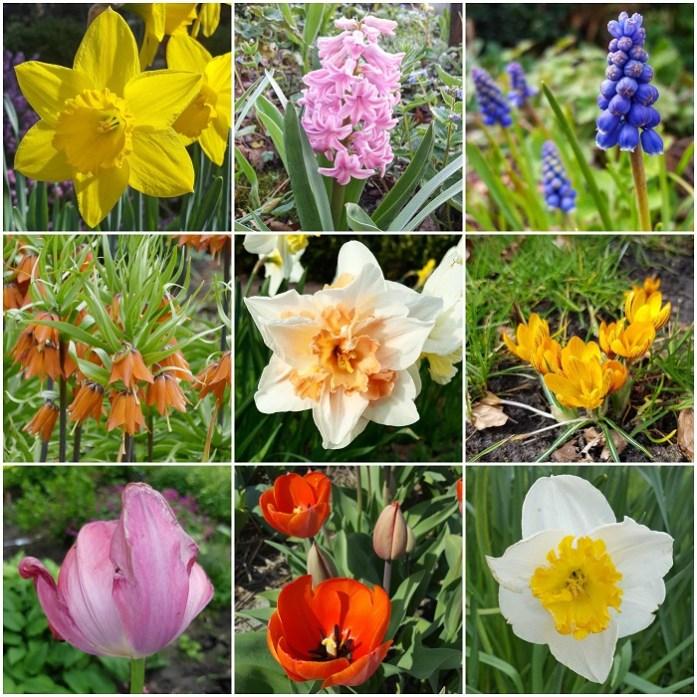 spring bulb flowers