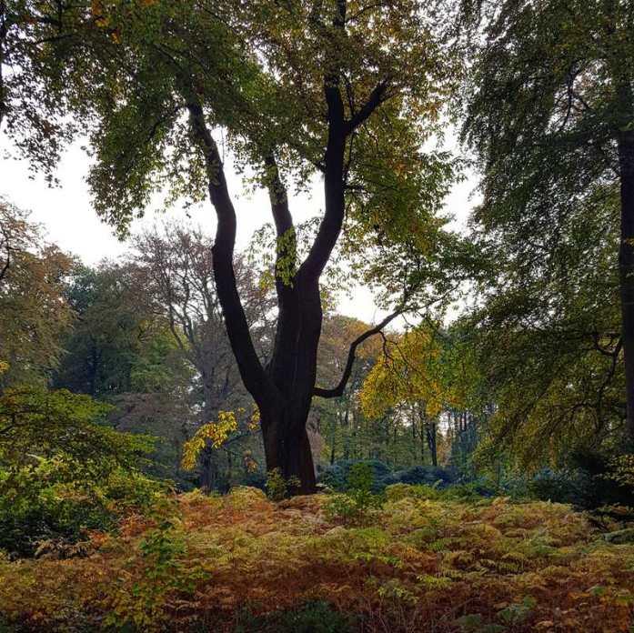 herfstwandeling s-graveland