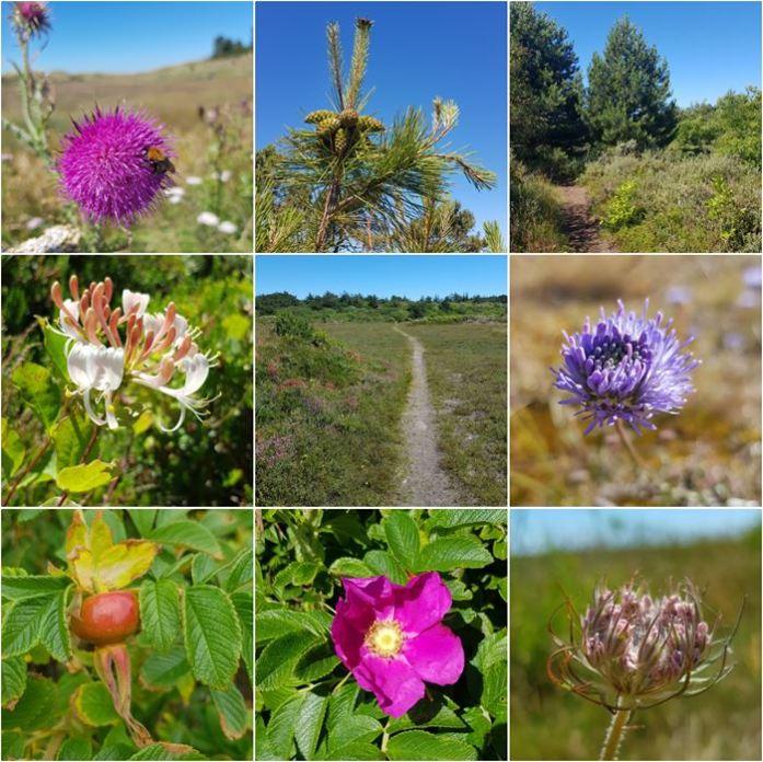 Vlieland flora