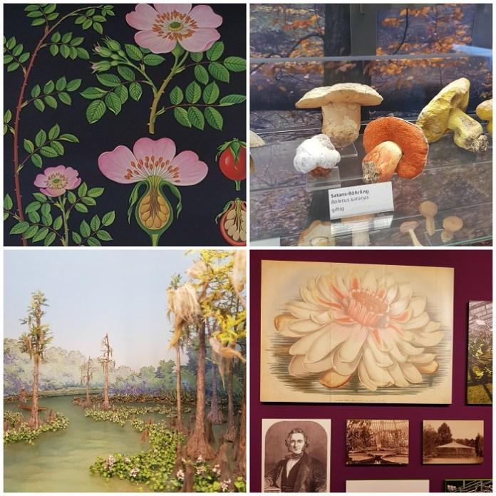 botanisch museum berlijn