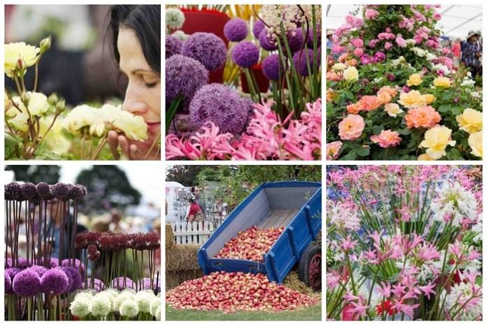 Britse flowershows