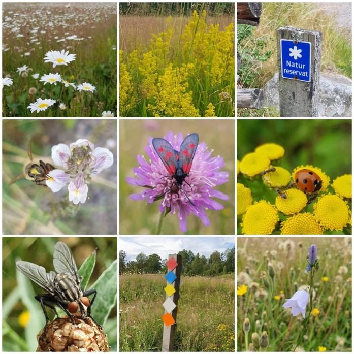 het bijenparadijs in Växjö