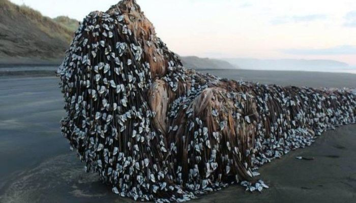 Mysterious Barnacle-Covered Object That Washed Ashore Finally Identified