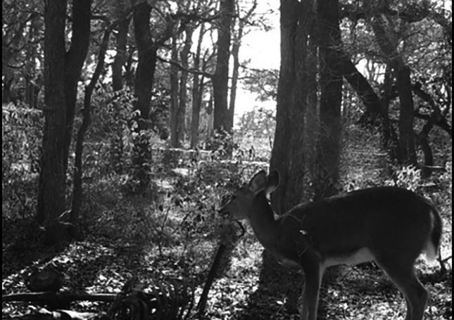 Scientists Catch a Deer Doing Something Grisly on Hidden Camera [VIDEO]