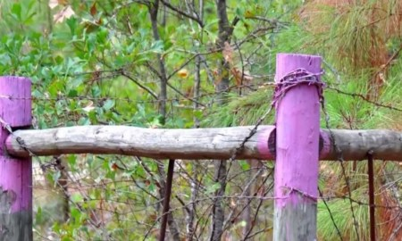 local-police-are-warning-if-you-spot-purple-fence-posts-to-get-away-as-soon-as-you-can-tn-1000x600