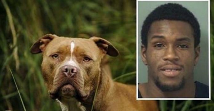 'Kill Em, Boy': Guy Tells Pit Bull To Attack Cops, Dog Has A Much Better Idea