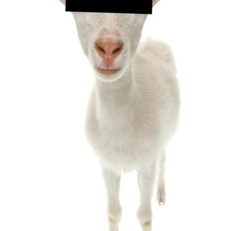 Oxford Students Make Love To a Goat: Will Muslims Charge Them With Culture Appropriation?