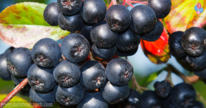 "The Healthiest Fruit in The World, ""Kills"" Cancer Cells, Viruses and Slows Aging"