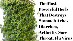 The Most Powerful Herb That Destroys Stomach Aches, Diarrhea, Arthritis, Sore Throat, Flu Virus.