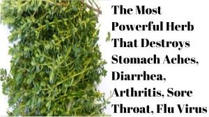 The Most Powerful Herb That Destroys Stomach Aches, Diarrhea, Arthritis, Sore Throat, Flu Virus.