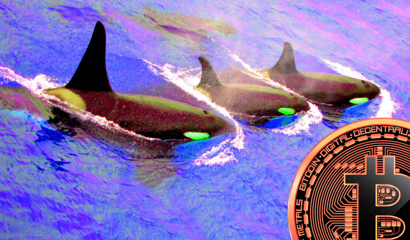 <bold>Quant</bold> Analyst Says Crypto Whale Activity Not Looking Good for Bitcoin
