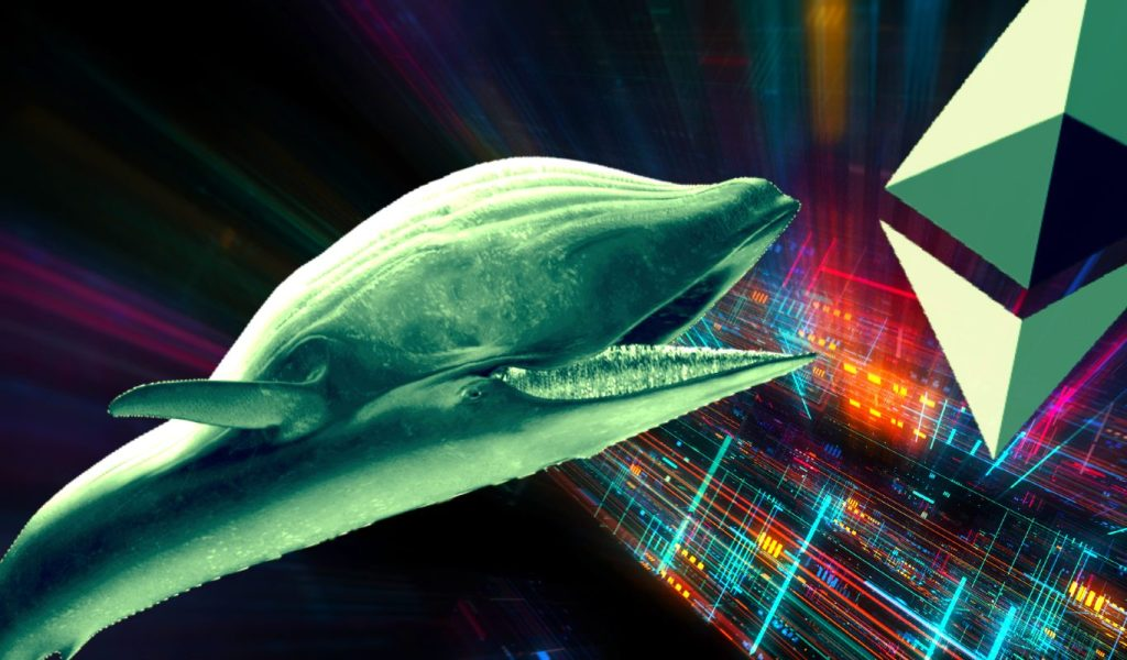 Bitcoin Whale Details Crypto Game Plan, Says He's Loading Up on One Altcoin and Rotating Profits to Ethereum