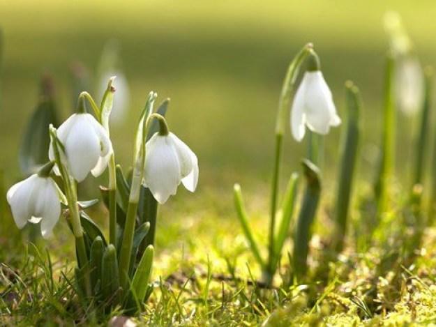 Последнее Новолуние зимы-2020: планируем будущую весну правильно